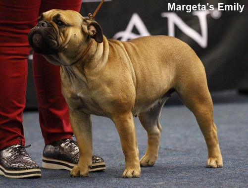 Jgd. Champion Margeta's Emily