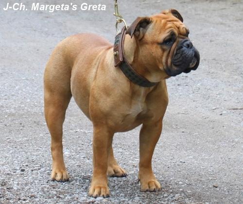 J-Champion Margeta's Greta